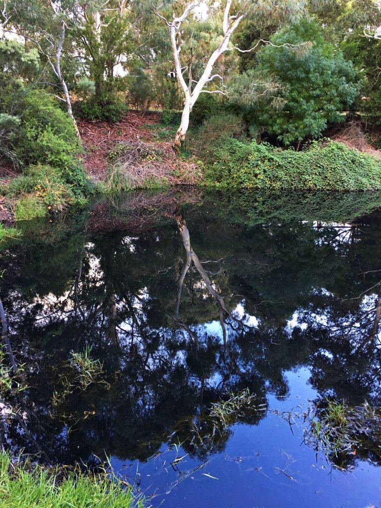 Esmond Reflections 1