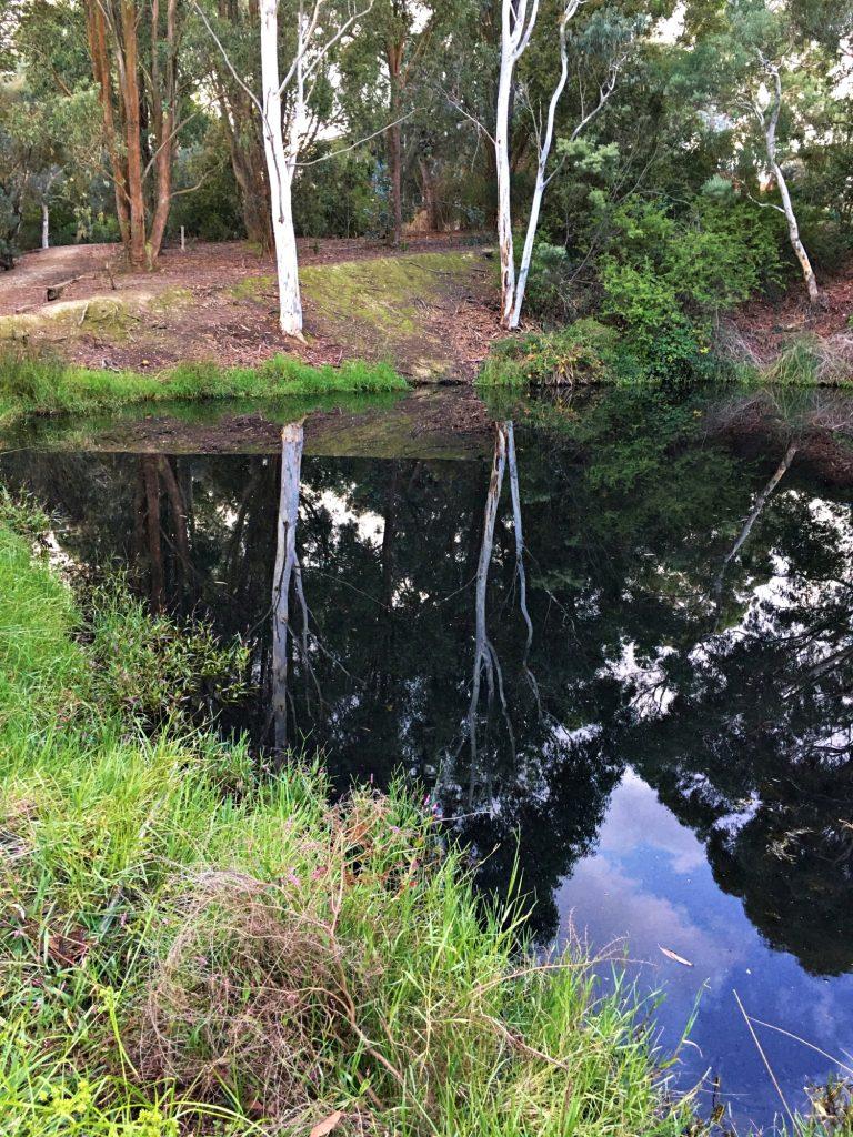 Esmond Reflections 2